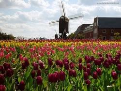 Cuba Participates in Tourism Fair in Holland